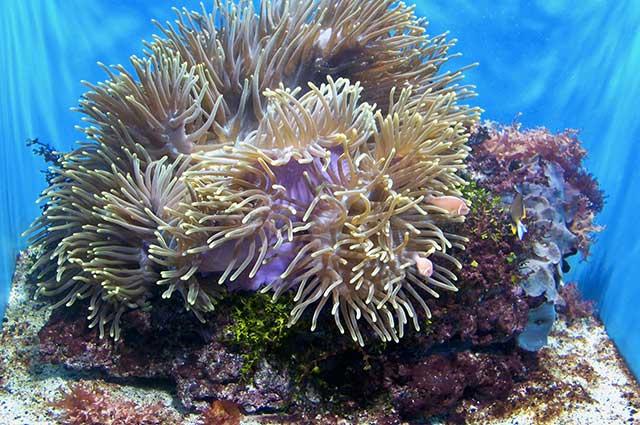 1160 0 Tipi di corallo per acquario