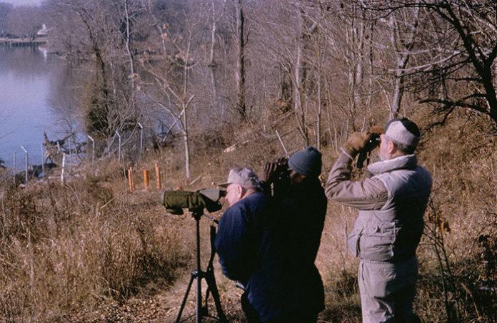 1268 0 Cosa aspettarsi da un corso di birdwatching