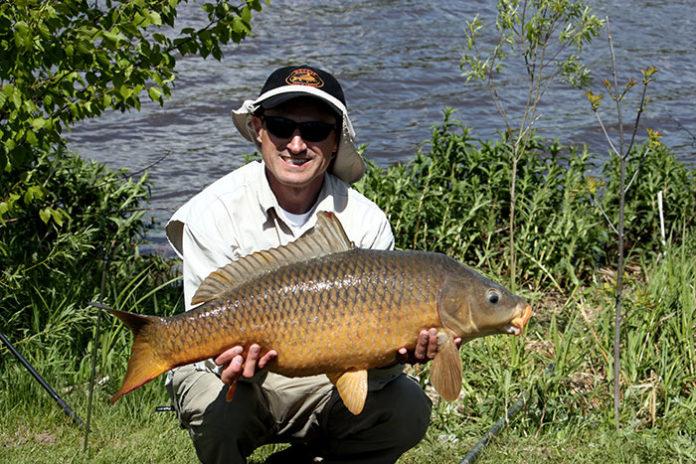 1306 0 La pesca in superficie delle carpe
