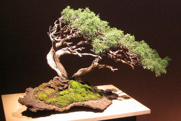 1323 0 potatura_dei_bonsai_ok