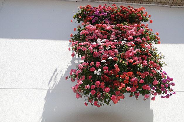 1633 0 come_fare_per_avere_un_balcone_fiorito