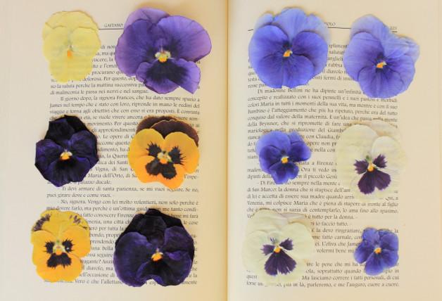 1639 0 fiori adatti da seccare_ok
