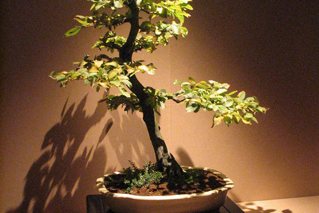 1680 0 come_potare_il_bonsai