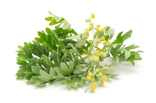 57 0 Artemisia