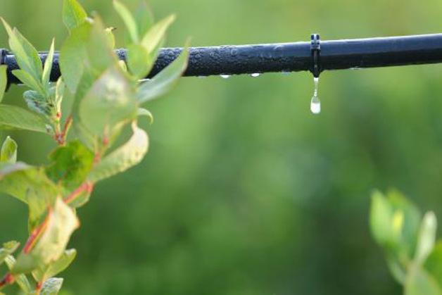 587 0 la_microirrigazione_e_l_irrigazione_goccia_a_goccia_ok