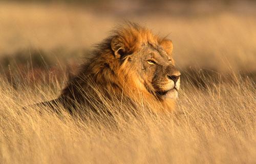 598 0 204 0 leone