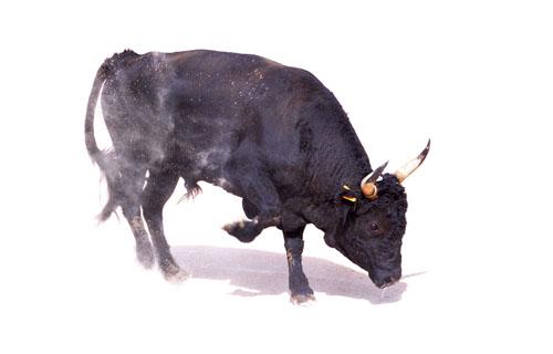 599 0 Toro