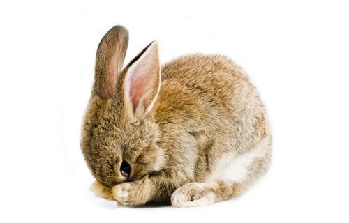 600 0 Il coniglio