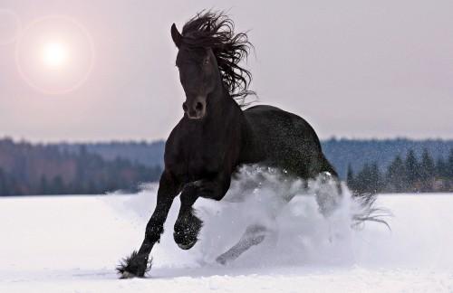614 0 Cavallo