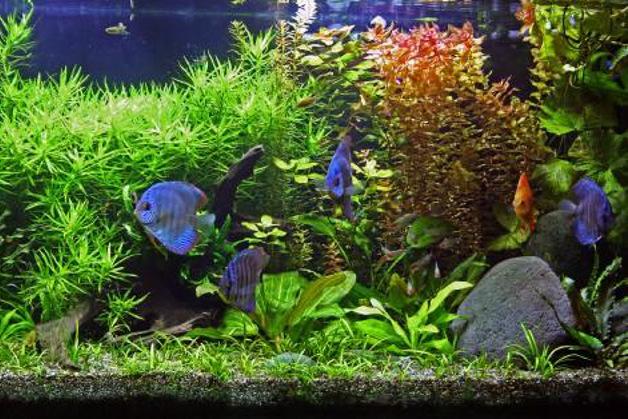 620 0 breve guida per la gestione dell acquario_ok
