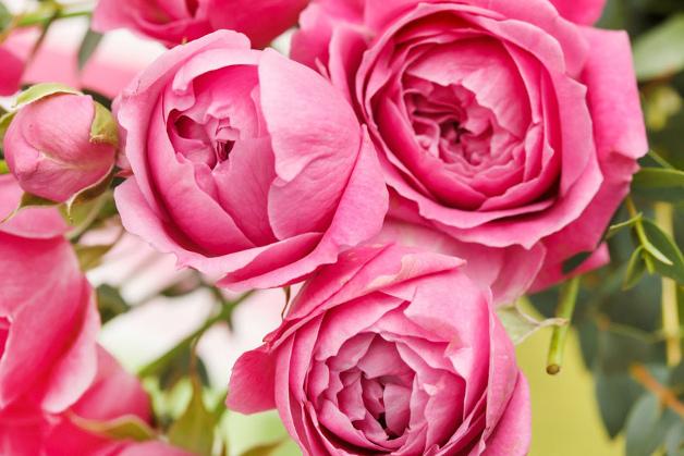 786 0 013_cura delle rose